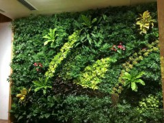 南京室内外墙体垂直绿化阻根板-美化环境